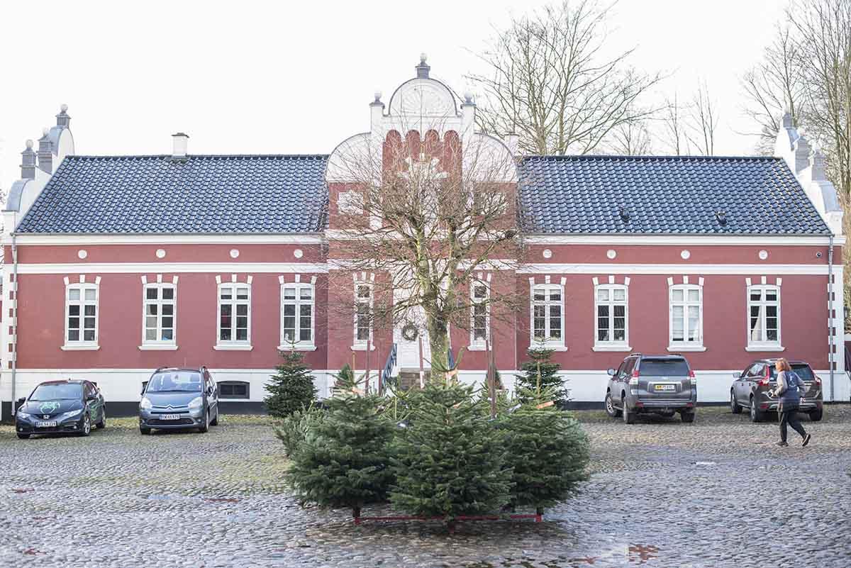 Fæld-selv juletræ Kolding - www.vangelyst.dk
