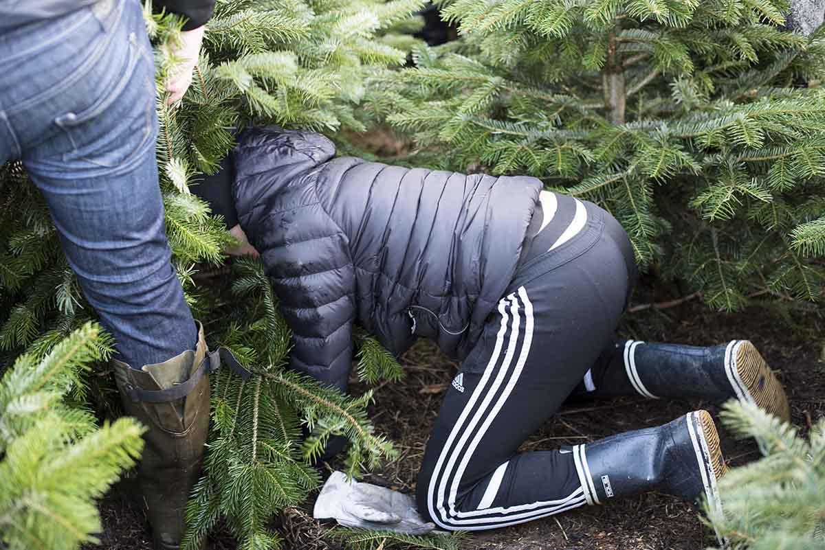 Årets juletræ 2017 - www.vangelyst.dk