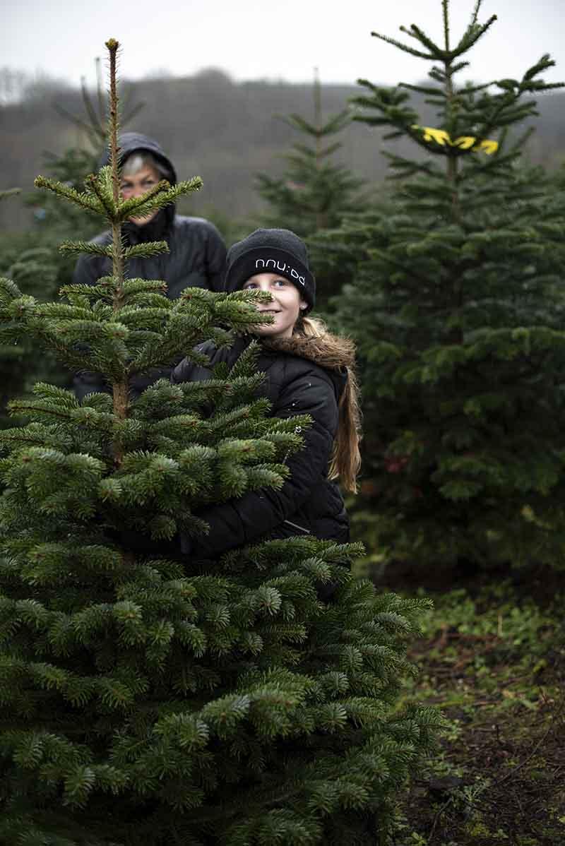 Fæld selv juletræ - www.vangelyst.dk