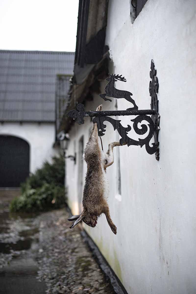 Skudt hare på jagt - www.vangelyst.dk