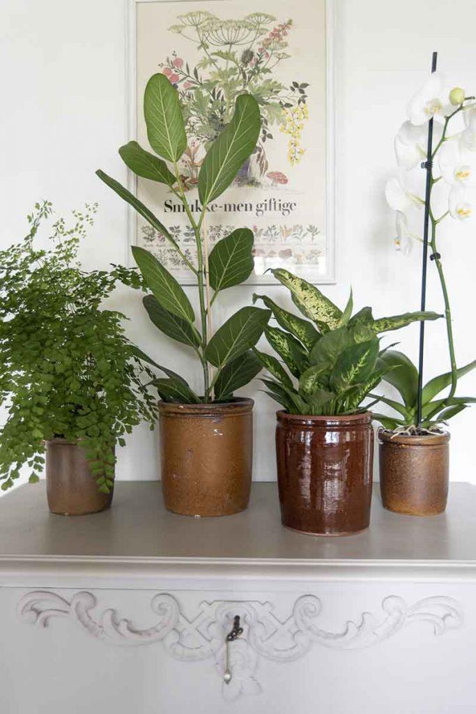 Grønne planter Billig Blomster