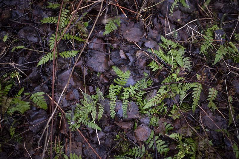 Detaljer fra skovbunden - www.vangelyst.dk