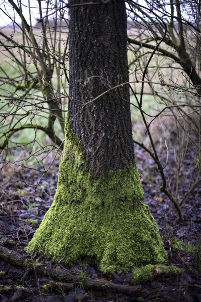 Naturens egen kunst - www.vangelyst.dk