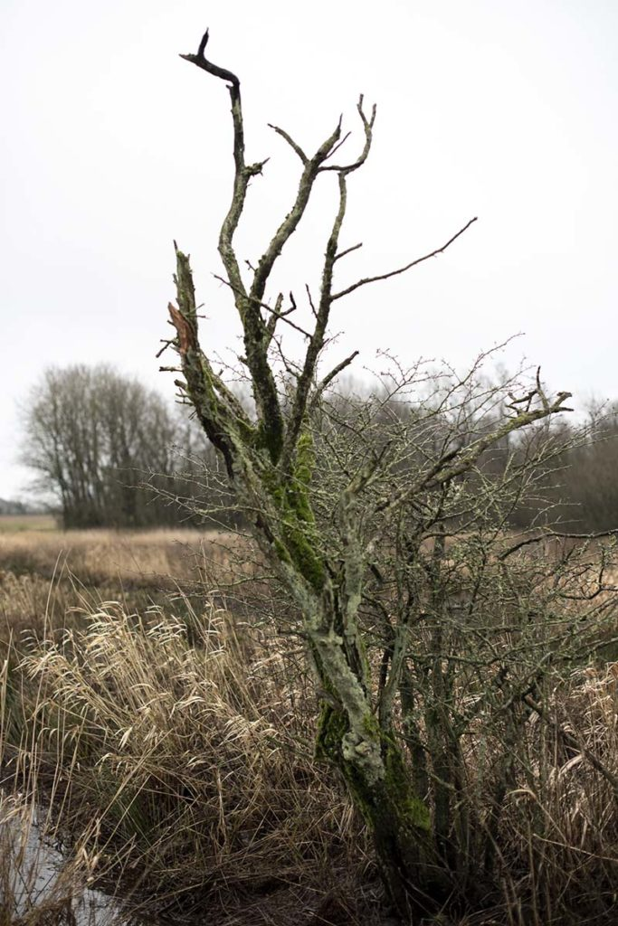 Enligt træ