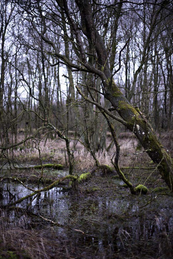 Vinterdag i skoven - www.vangelyst.dk