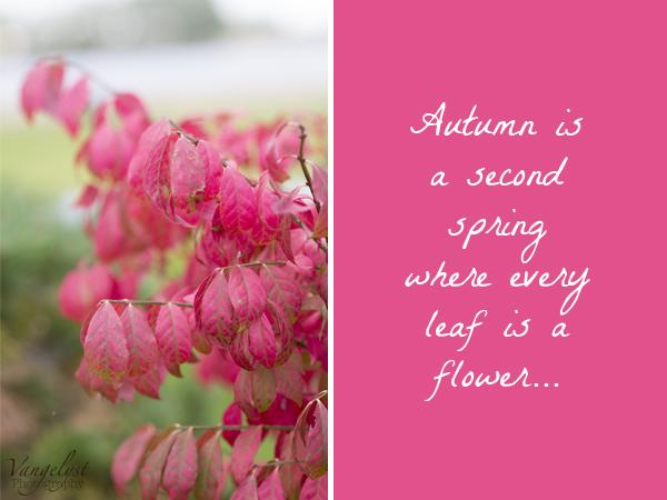 efterår citater Pink efterår   haven i efterårsfarver // Pink autumn |   efterår citater